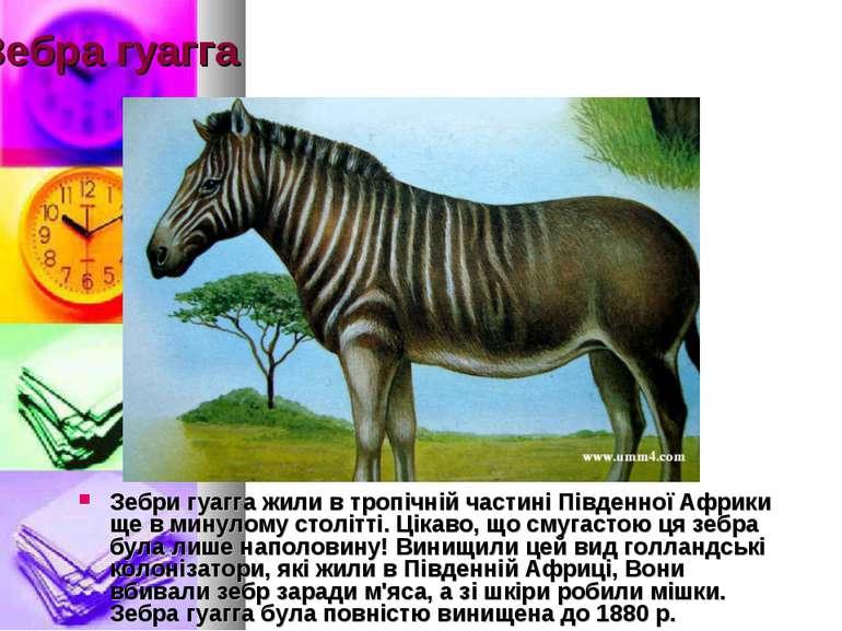 Зебра гуагга Зебри гуагга жили в тропічній частині Південної Африки ще в мину...