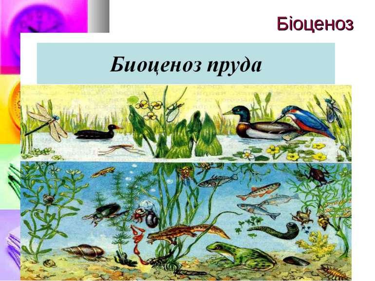 Біоценоз