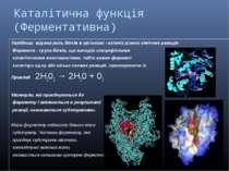 Каталітична функція (Ферментативна) Найбільш відома роль білків в організмі -...