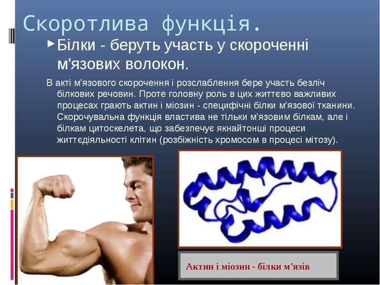 Скоротлива функція. Білки - беруть участь у скороченні м'язових волокон. В ак...