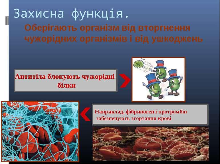 Захисна функція. Оберігають організм від вторгнення чужорідних організмів і в...
