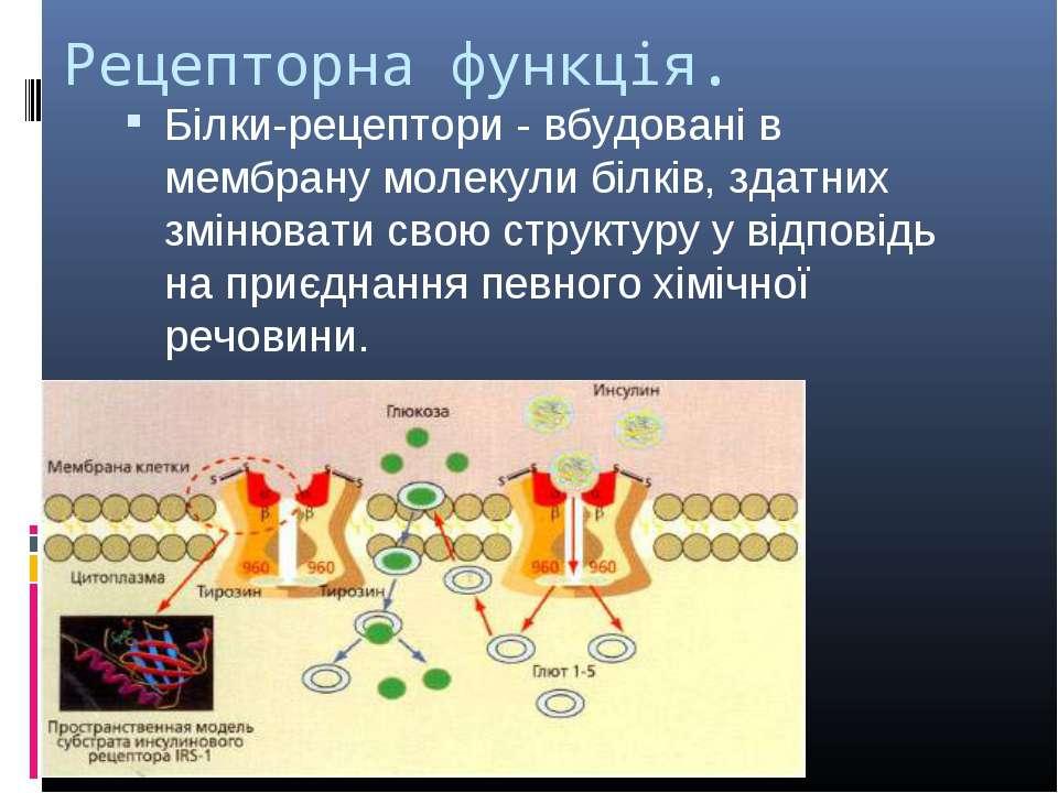 Рецепторна функція. Білки-рецептори - вбудовані в мембрану молекули білків, з...