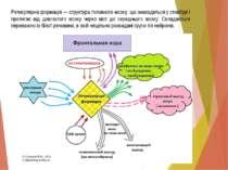 Ретикулярна формація — структура головного мозку, що знаходиться у стовбурі і...