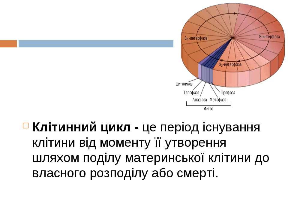 Клітинний цикл - це період існування клітини від моменту її утворення шляхом ...