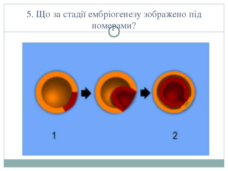 5. Що за стадії ембріогенезу зображено під номерами?
