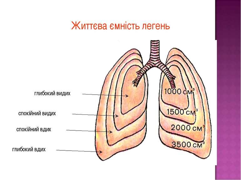 Життєва ємність легень глибокий видих спокійний видих спокійний вдих глибокий...