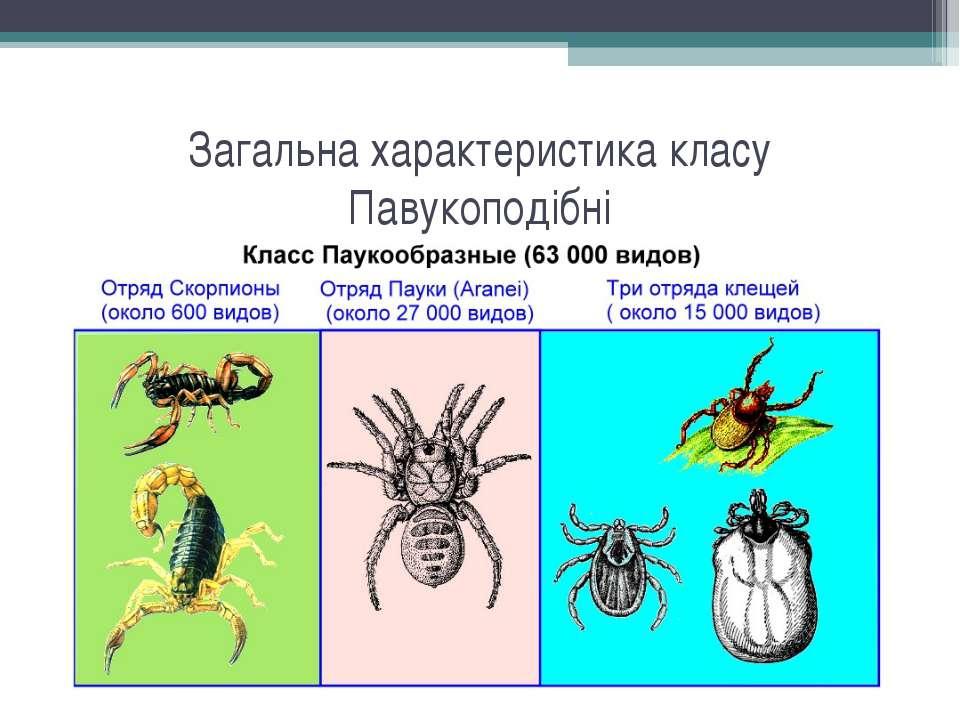 Загальна характеристика класу Павукоподібні
