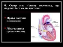6. Серце має м'язову перетинку, що поділяє його на дві частини: Права частина...