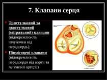 7. Клапани серця Тристулковий та двостулковий (мітральний) клапани (відокремл...
