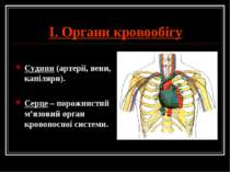 І. Органи кровообігу Судини (артерії, вени, капіляри). Серце – порожнистий м'...