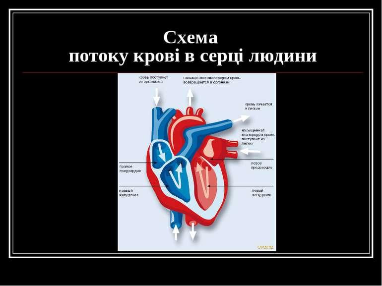 Схема потоку крові в серці людини