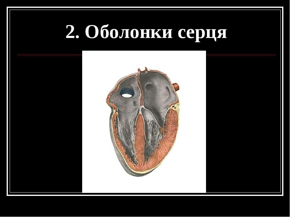 2. Оболонки серця