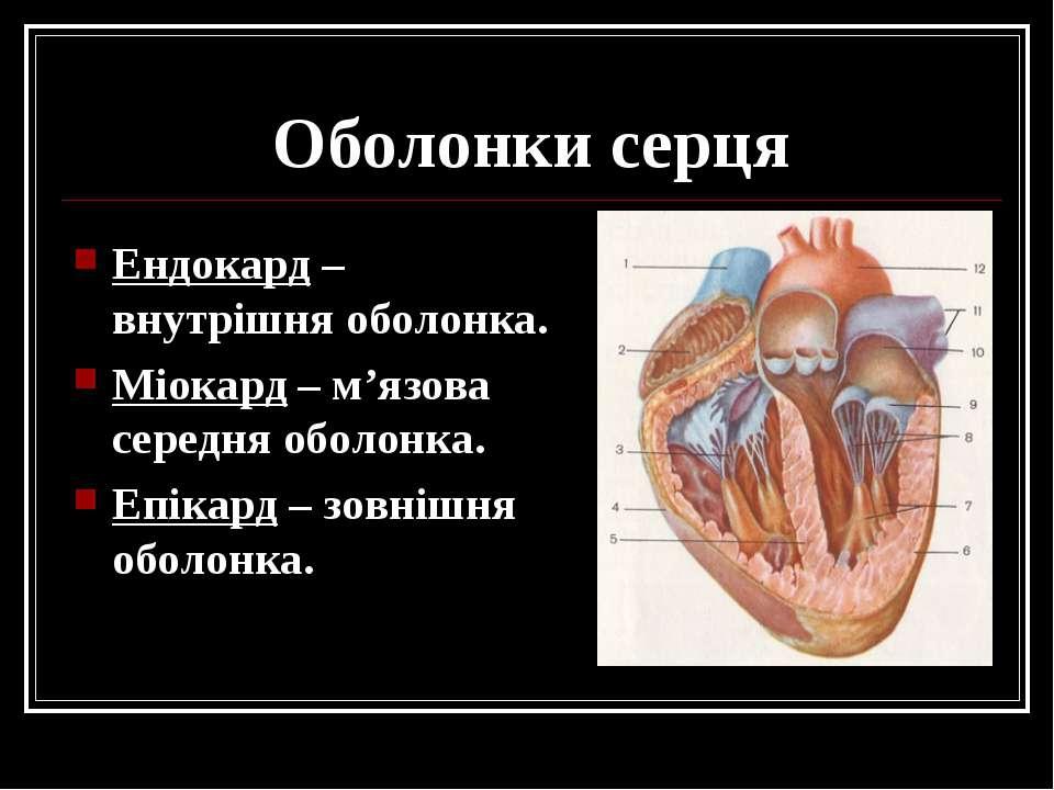 Оболонки серця Ендокард – внутрішня оболонка. Міокард – м'язова середня оболо...