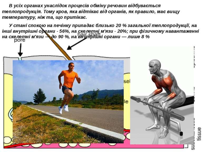 В усіх органах унаслідок процесів обміну речовин відбувається теплопродукці...