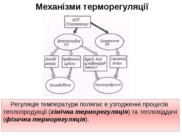 Механізми терморегуляції Регуляція температури полягає в узгодженні процесів ...