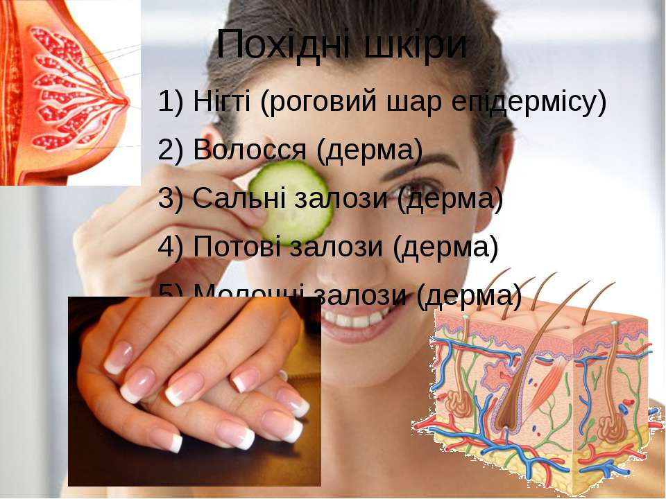 Похідні шкіри 1) Нігті (роговий шар епідермісу) 2) Волосся (дерма) 3) Сальні ...