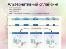 Альтернативний сплайсинг 1977 – аденовіруси 1981 – кальцитонін 1981 – антитіл...