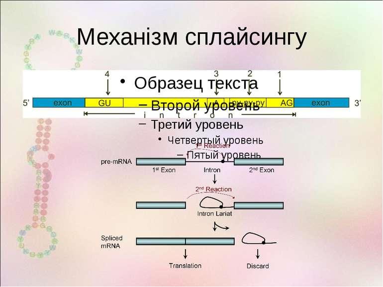 Механізм сплайсингу