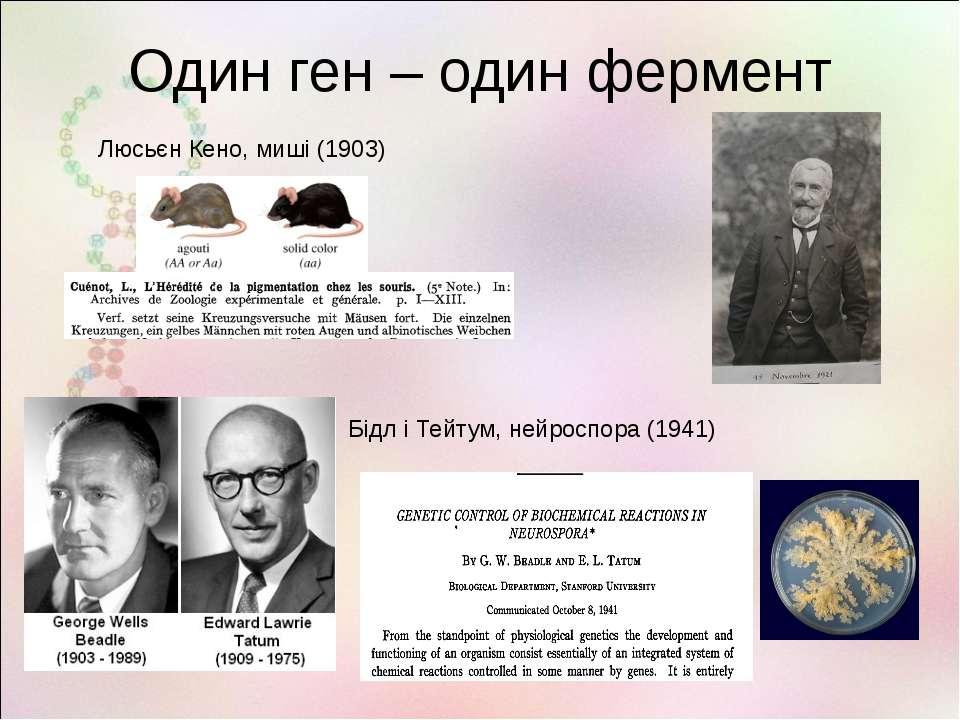 Один ген – один фермент Люсьєн Кено, миші (1903) Бідл і Тейтум, нейроспора (1...