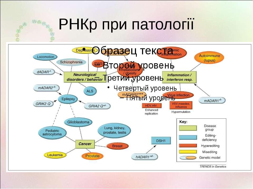 РНКр при патології