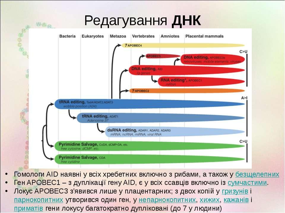 Редагування ДНК Гомологи AID наявні у всіх хребетних включно з рибами, а тако...