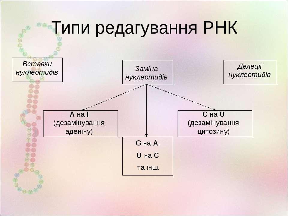 Типи редагування РНК А на І (дезамінування аденіну) С на U (дезамінування цит...