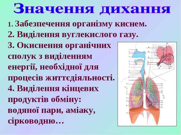1. Забезпечення організму киснем. 2. Виділення вуглекислого газу. 3. Окисненн...