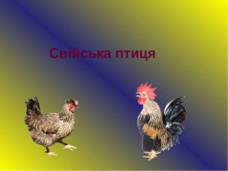 Свійська птиця
