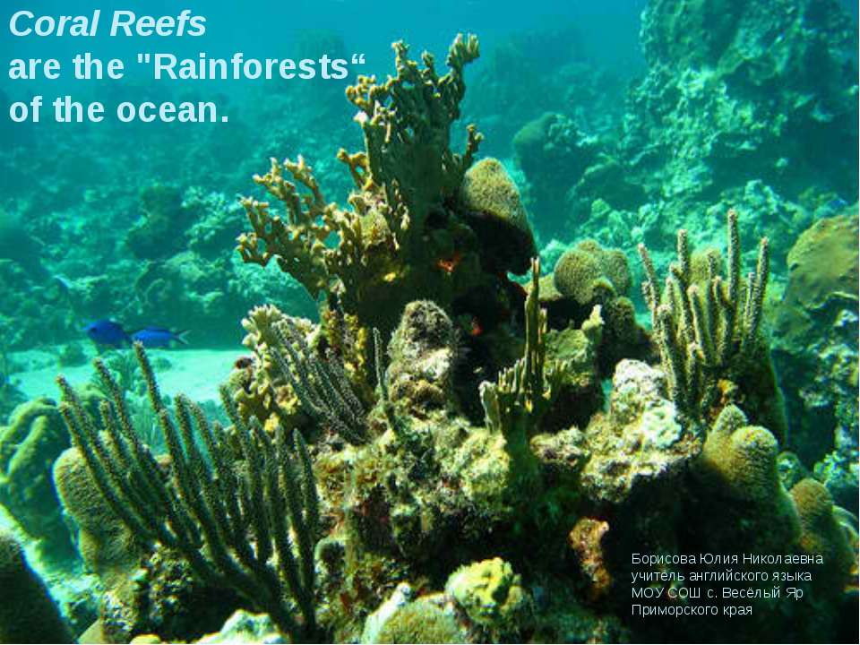 """Coral Reefs are the """"Rainforests"""" of the ocean. Борисова Юлия Николаевна учит..."""