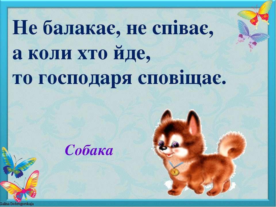 Собака Не балакає, не співає, а коли хто йде, то господаря сповіщає.