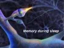 Memory during sleep