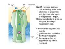 NMDA receptor has two critical binding sites. One site binds to glutamate and...