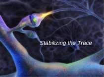 Stabilizing the Trace