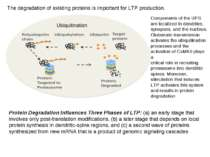 The degradation of existing proteins is important for LTP production. Compone...
