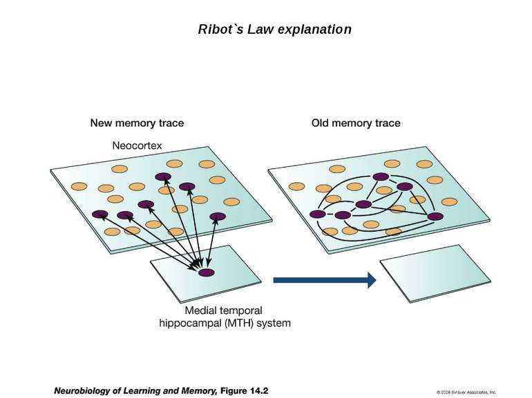 Ribot`s Law explanation