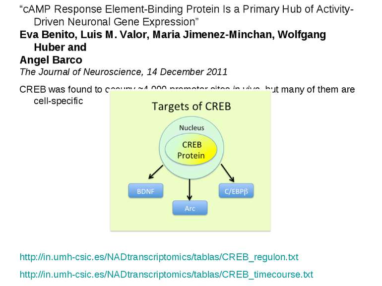 """cAMP Response Element-Binding Protein Is a Primary Hub of Activity-Driven Ne..."