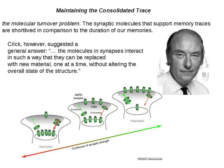 Maintaining the Consolidated Trace the molecular turnover problem. The synapt...