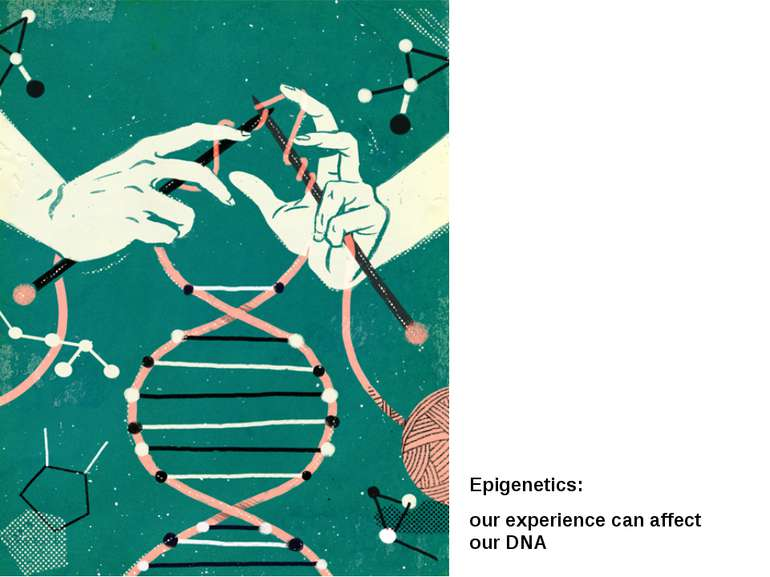 Epigenetics: our experience can affect our DNA