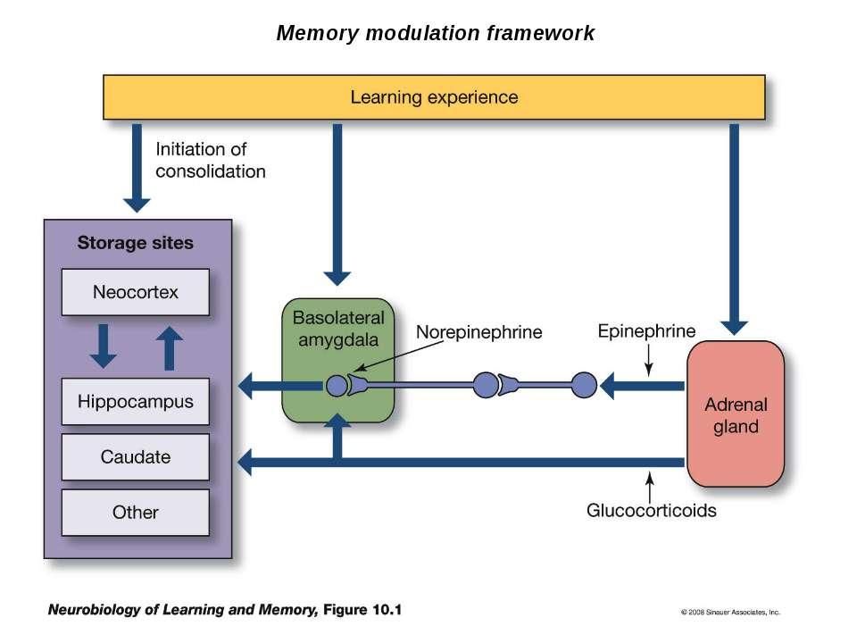 Memory modulation framework