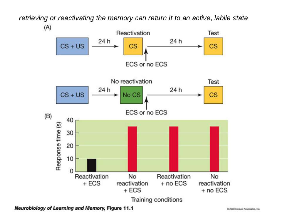 retrieving or reactivating the memory can return it to an active, labile state