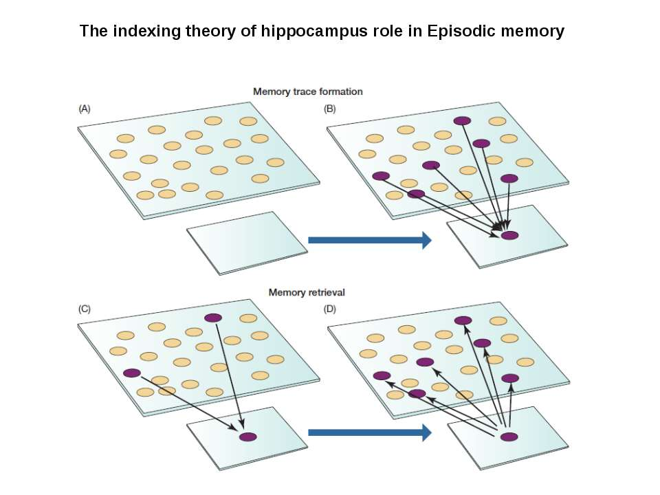 The indexing theory of hippocampus role in Episodic memory