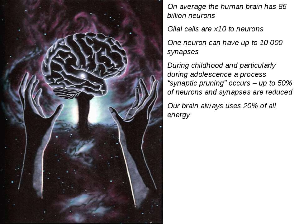 On average the human brain has 86 billion neurons Glial cells are x10 to neur...