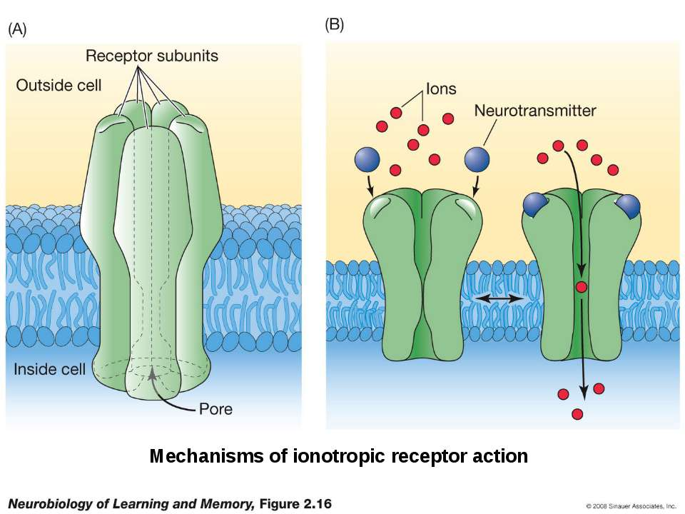 Mechanisms of ionotropic receptor action