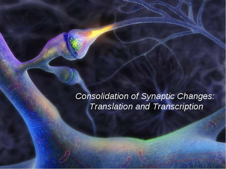 Consolidation of Synaptic Changes: Translation and Transcription