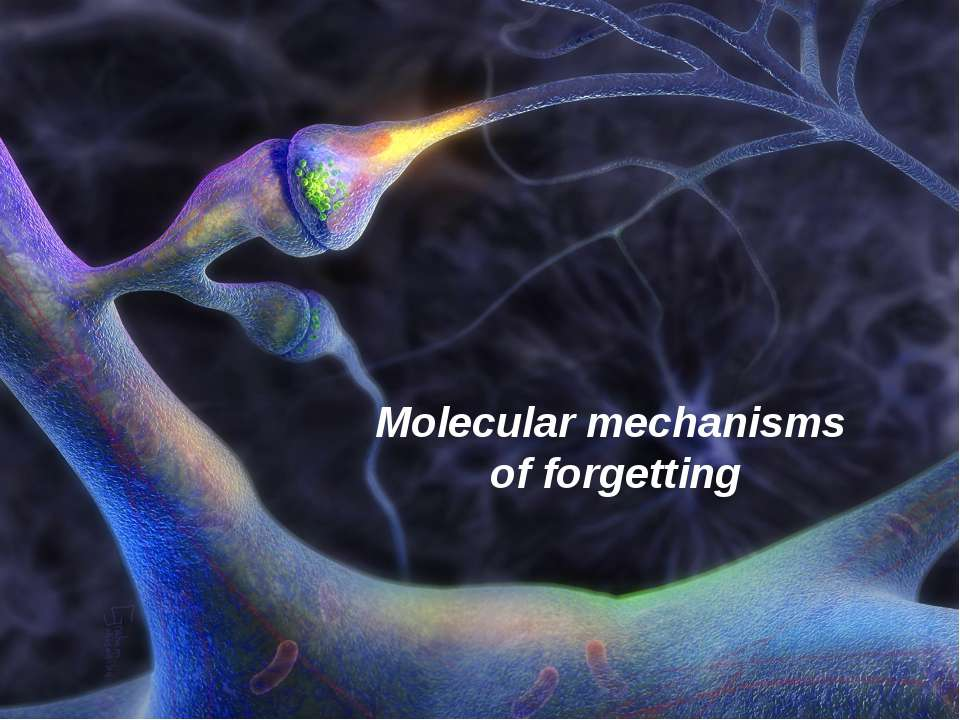 Molecular mechanisms of forgetting