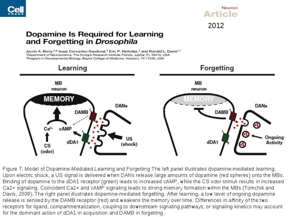 Figure 7. Model of Dopamine-Mediated Learning and Forgetting The left panel i...