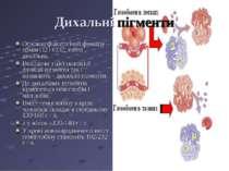 Дихальні пігменти Основна фізіологічна функція - обмін О2 і СО2, тобто дихаль...