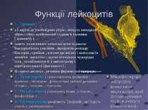 Функції лейкоцитів 1 . Захисна : а ) здатні до амебоидних рухів , можуть вихо...