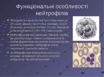 Функціональні особливості нейтрофілів Знаходяться в кровоносній руслі максиму...