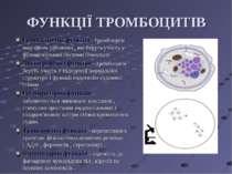ФУНКЦІЇ ТРОМБОЦИТІВ Гемостатична функція - тромбоцити виділяють речовини , як...